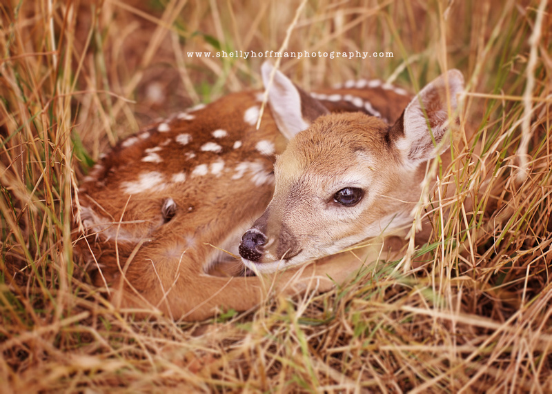 The image of this spotted newborn emphasizes the natural in my style of photography.