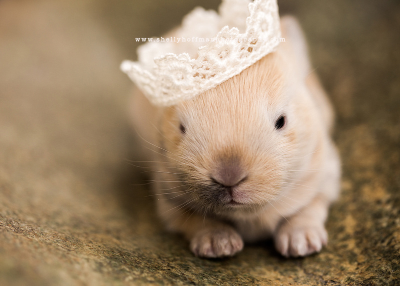 Newborn bunny portrait, Austin, TX newborn photography