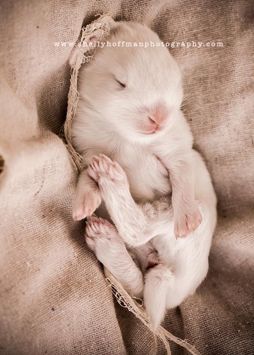 Austin TX Newborn portrait, newborn bunny