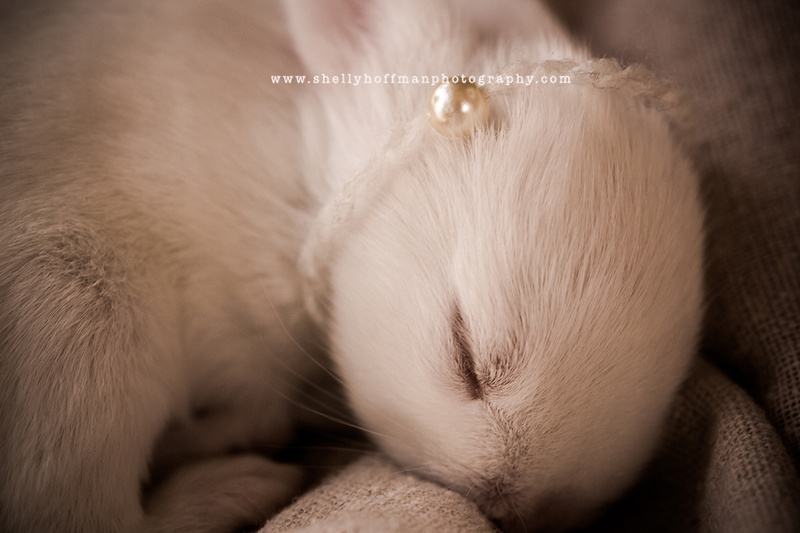 Newborn bunny portrait, Austin, TX newborn photography